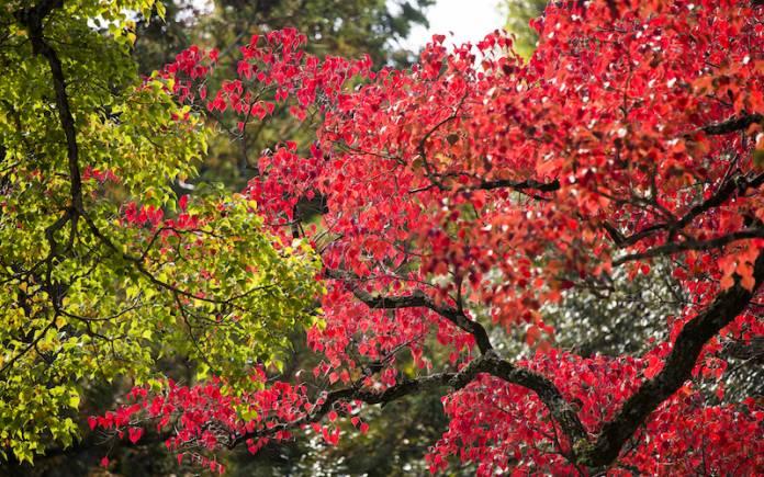 Autumn leaf season change Climate in Turkey